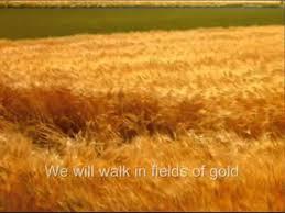 fields of gold new horizon athlone